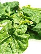 SPINACH Worldwide distribution except for South Africa Spinach leaves.