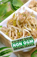 MUNG BEAN Mung bean sprouts Vigna radiata abusively called soya bean sprouts , certificed no GMO and origin France.