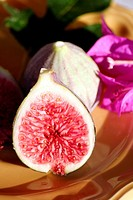 FIG On the fig, that we consume as a fruit is in fact a floral conceptacle that became pulpy. The true fruits of the fig tree are small hard grains in...