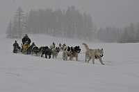 SNOW SLED Sled dogs in the Queyras. Department of Hautes_Alpes, France.