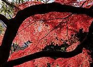 Nature Scenes In Japan