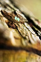 Close_up of a log