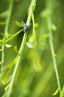 Close_up of a fly on a stem