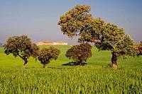 Valle de la Serena. Badajoz province, Extremadura, Spain