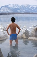 Japaneseman in hot spring, Whooper Swans, Lake Kussharo, Hokkaido, Japan, Cygnus cygnus, Whopper Swan