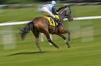 Jockey racing a horse, gallop race, racetrack in Munich Riem, Upper Bavaria, Bavaria, Germany, Europe