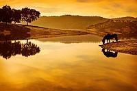 Landscape, Huéznar reservoir, Seville province, Andalusia, Spain