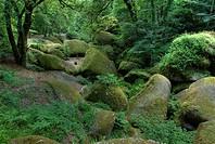 Granite rocks in Huelgoat Forest, Britanny, France, Europe