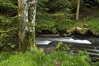 Flowing water and stream landscape, Eyach Valley, Northern Black Forest, Baden-Wuerttemberg, Germany, Europe
