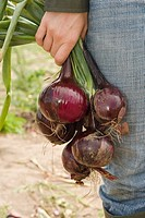 Woman holding fresh red onions