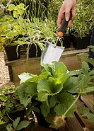 A cropped shot of a trowel and plants