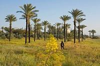 Woman hiking between palm trees, Hala Sultan Tekke mosque at Larnaka Salt Lake, Larnaka, South Cyprus, Cyprus