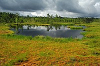 Stormy atmosphere in the raised moss, Sweden, Scandinavia