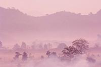 Morning fog over Mrauk U, Myanmar Burma, Asia