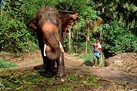 Hosing down elephant, Punnathur Kotta Elephant Fort, housing fifty elephants, financed by temples, Kerala state, India, Asia