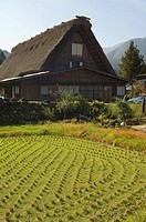 Rice field and traditional gassho zukuri thatched roof houses, Shirakawa_go village, UNESCO World Heritage Site, Gifu prefecture, Japan, Asia