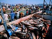 Tuna fish catch, Favignana Island, Egadi Islands, Sicily, Italy, Mediterranean, Europe