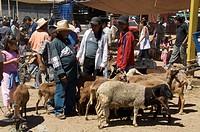 Livestock market, Zaachila, Oaxaca, Mexico, North America