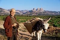 Man and donkey, near Tarragona, Catalonia Cataluna Catalunya, Spain, Europe
