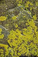 Lichen on rocks, Devon, England, United Kingdom, Europe