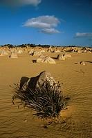 Limestone pillars in the Pinnacles Desert, Nambung National Park, Western Australia, Australia, Pacific