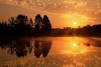 Schwenninger Moos at sunrise, with B/Y Polarizer, Schwenningen, Germany, Europe