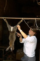 slaughter of a rabbit