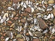 10851938, Sweden, gravel, beach, stones, detail, c