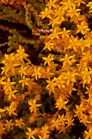 Close_up of yellow flowers