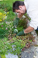 A man planting flowers in a garden
