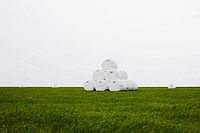 Wrapped hay bales stacked in field