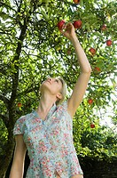 Woman and apple tree