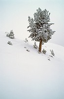 Winterly pineals in the Sellrain valley Austria