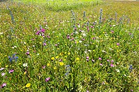 Meadow at the BUGA Munich 05, Photoshop-artistic-filter,