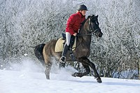 Young rider on back of German pony galloping in winter