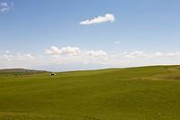 Meadow of Xi Baiyanggou, Wulumuqi, Xinjiang Uyghur autonomy district, Silk Road, China