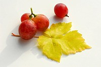 Grapes ´Red Globe´, Vitis vinifera