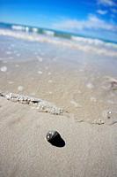 Snailshell on the beach