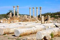 Lying and standing ancient columns with ionic capital, Ruins of the Roman City Leptis Magna, Libya