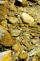 Mountain river with preticipated iron oxide on pebbles