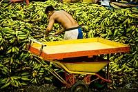 Pupunha, Fair of Banana, Center, Amazônia, Manaus, Amazonas, Brazil