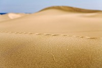 Ridge in the the sand dunes of Maspalomas, Gran Canaria, Canary Islands, Spain, Europe