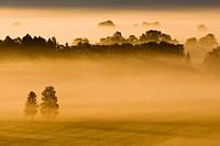 Landscape covered in fog, Bavarian pre-Alps, Upper Bavaria, Bavaria, Germany, Europe
