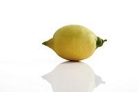 Lemon (Citrus × limon)
