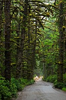 Car on the road to Tow Hill, Naikoon Provincial Park, Queen Charlotte Islands, British Columbia, Canada