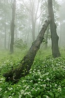 Javorina national wilderness area, White Carpathian Mountains, protected landscape area, Bile Karpaty, South Moravia, Czech Republic, Europe