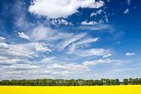 Spring landscape with rape field near Olbramovice, Znojmo district, South Moravia, Czech Republic, Europe