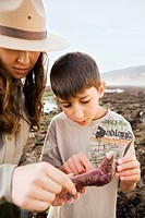 Mixed Race female park ranger and boy looking at starfish