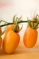 Freshly Harvested Orange Cherry Tomatoes on Cutting Board. Solanum lycopersicon.