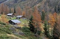 Traditional wooden alpine hut with larches in autumn colours, Lesachalmen, Hochschober range, National Park Hohe Tauern, East Tyrol, Austria